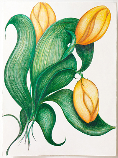 "Yellow Tulips , colored pencil on BFK Reeves, 22"" x 328"""