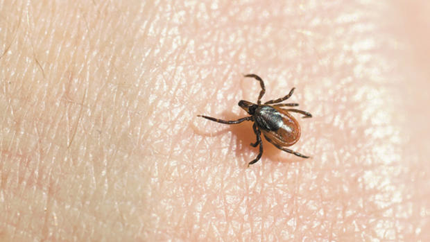 Ticks & Mosquitoes - Help protect your family from ticks and mosquitoes with tick and mosquito treatments from Ted Collins.