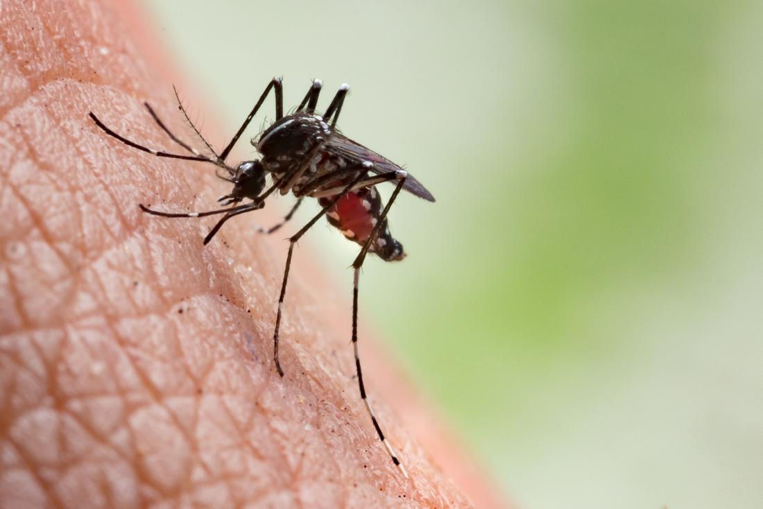 mosquito-preparing-to-bite.jpg