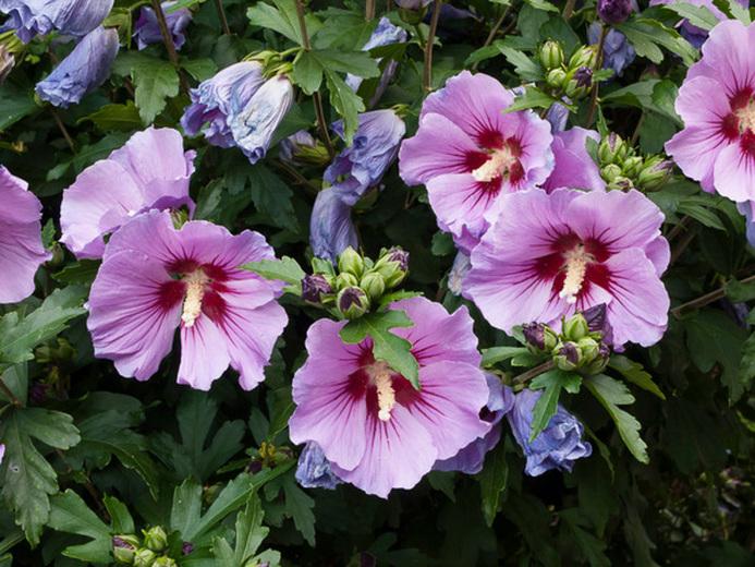 botanikfoto-462191-L.jpg