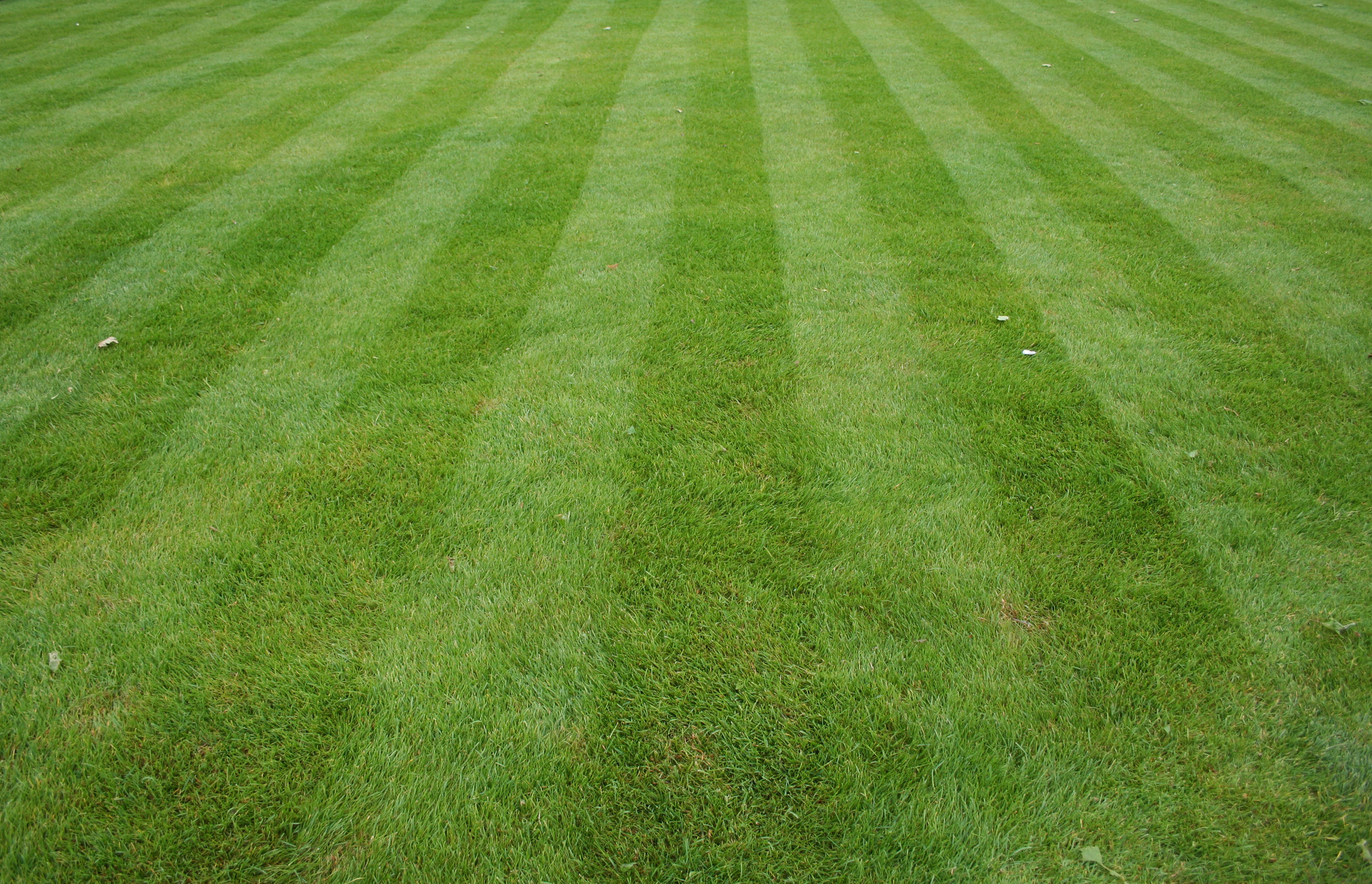 Traditional-Lawn-Fertilizer-Program-Pleasant-View-Nursery-Garden-Center-Worcester-MA.jpg