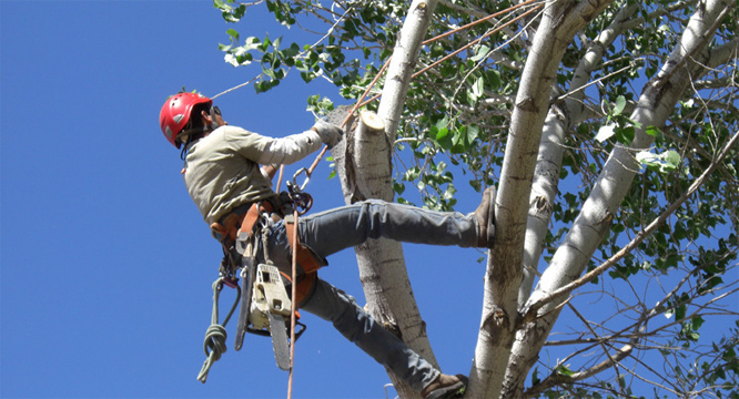 questions-ask-hiring-tree-care-service-bedford-tx.jpg