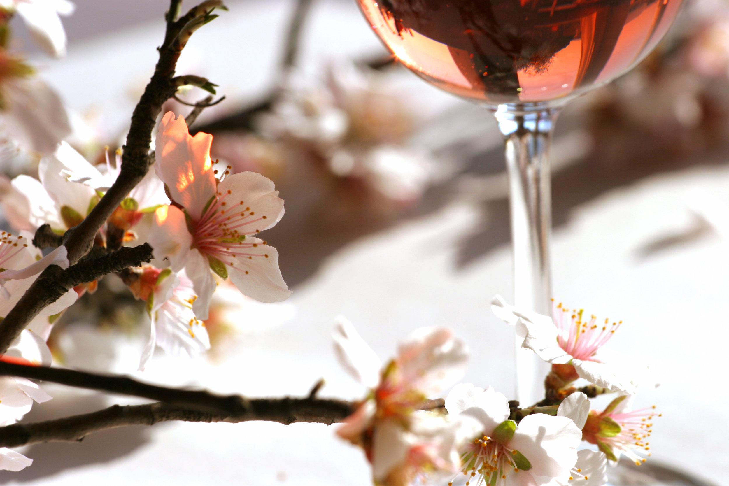 amandier et rosé Languedoc.jpg