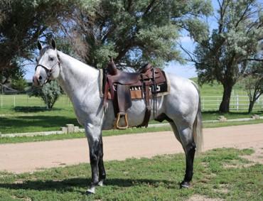 gallopococross-stallion
