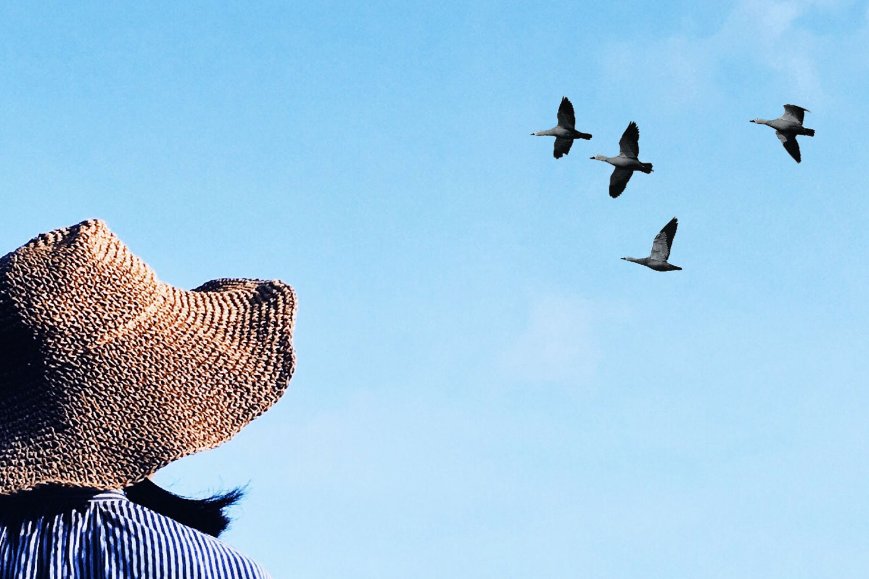 birds-692977-unsplash.jpg