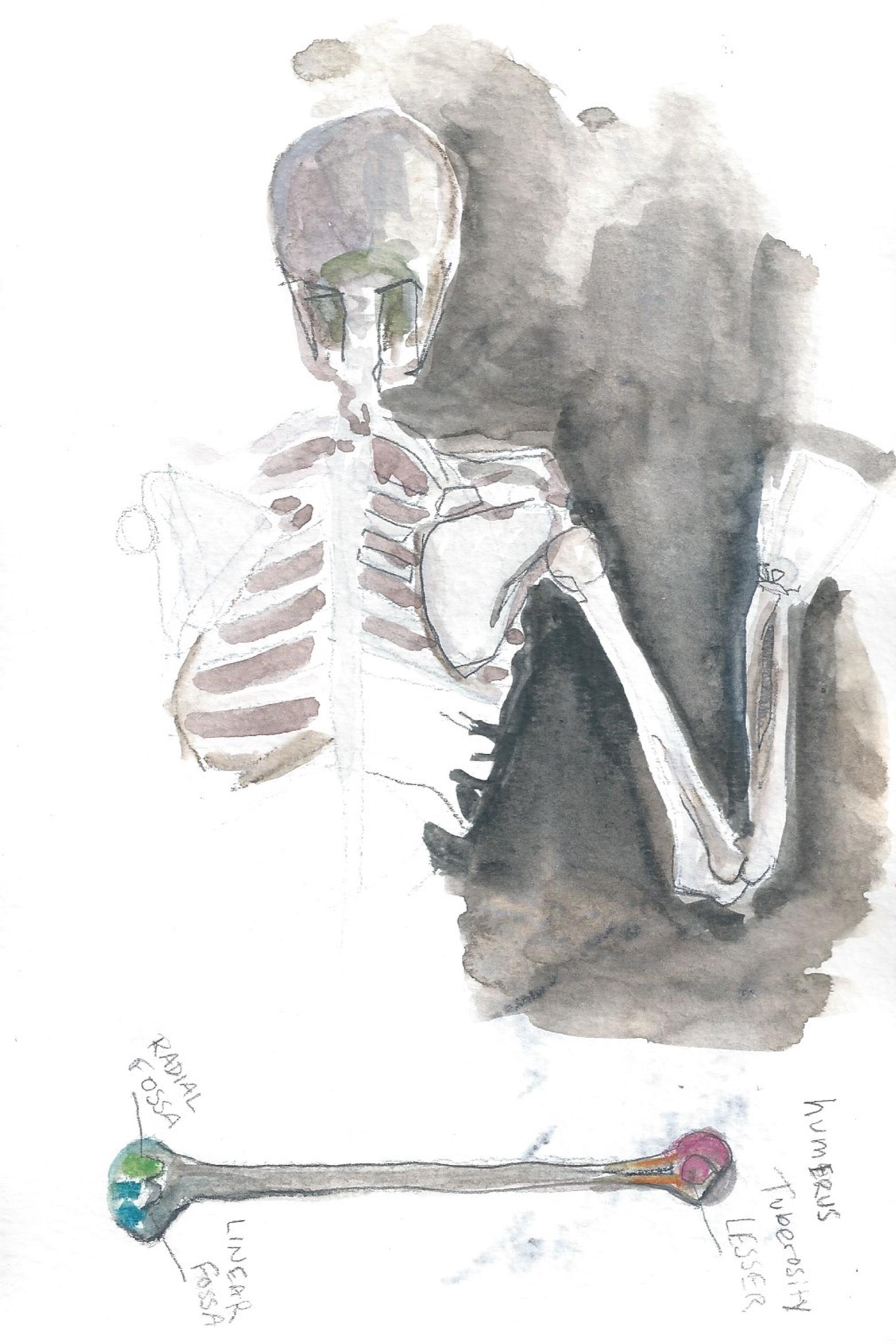 anatomy4.jpg