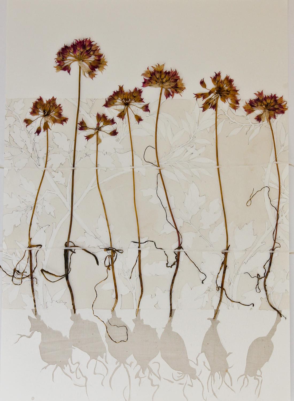 Allium Chorus