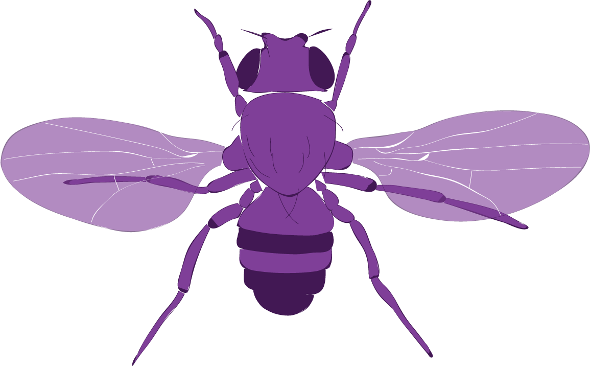 fly_vector.png