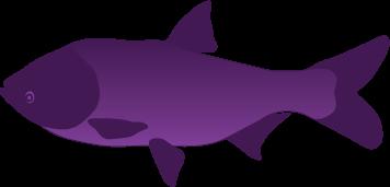 vector_fish.png
