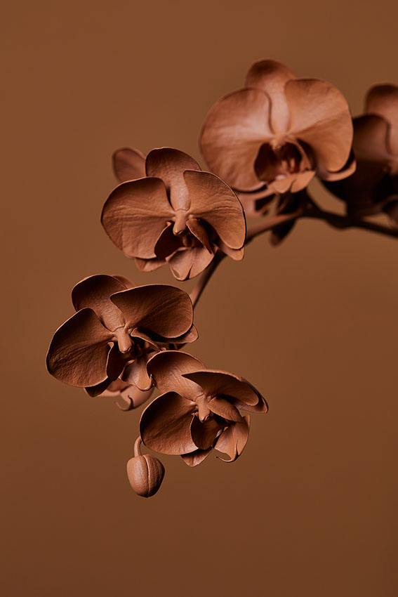 Orchids+4+food+and+props+stylist+advertising+and+packaging+Sydney+Gemma+Lush.jpg