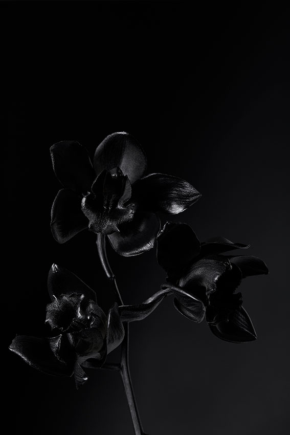 Orchids+food+and+props+stylist+advertising+and+packaging+Sydney+Gemma+Lush.jpg