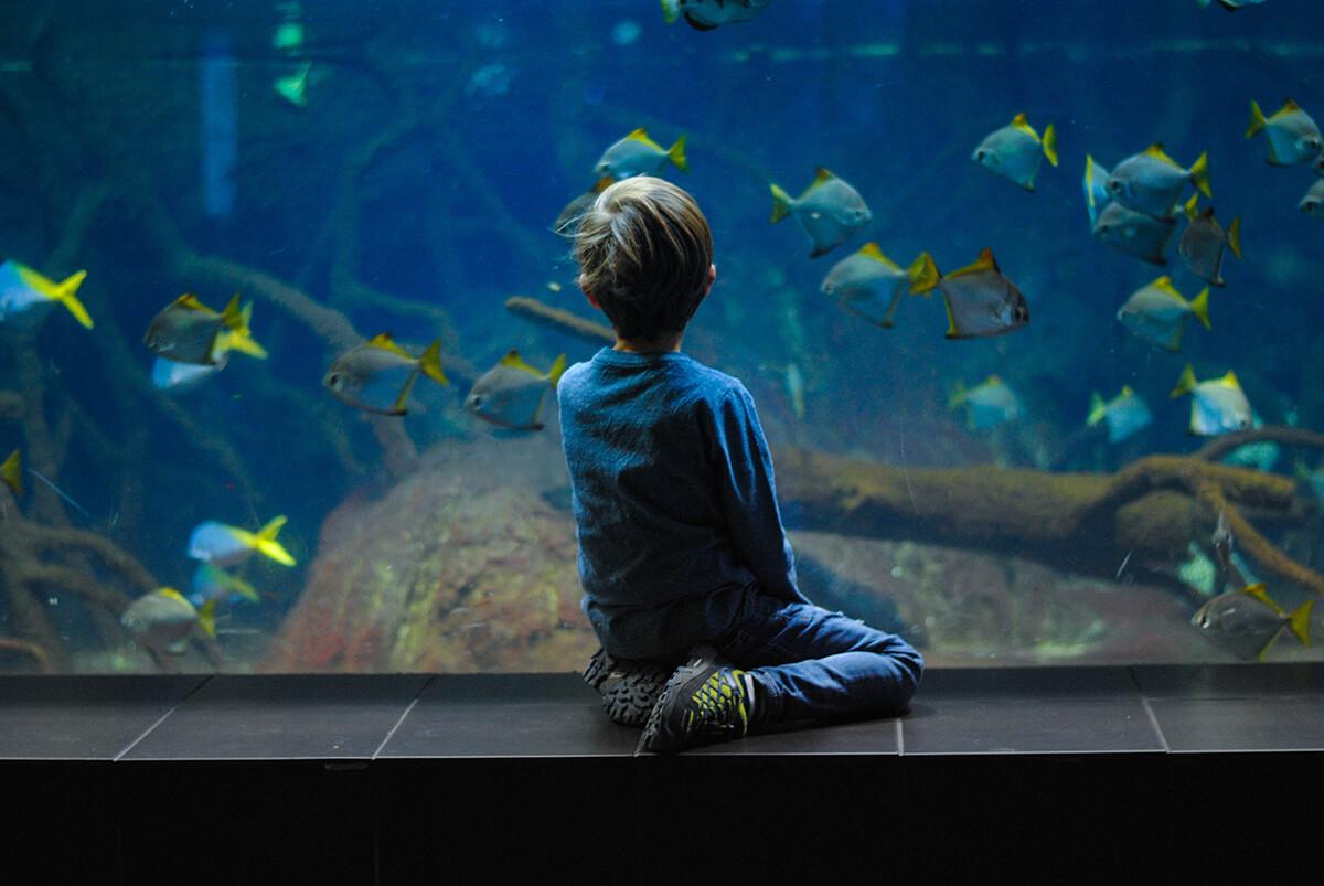 Siniriutta merivesiakvaario akvaario riutta-akvaario