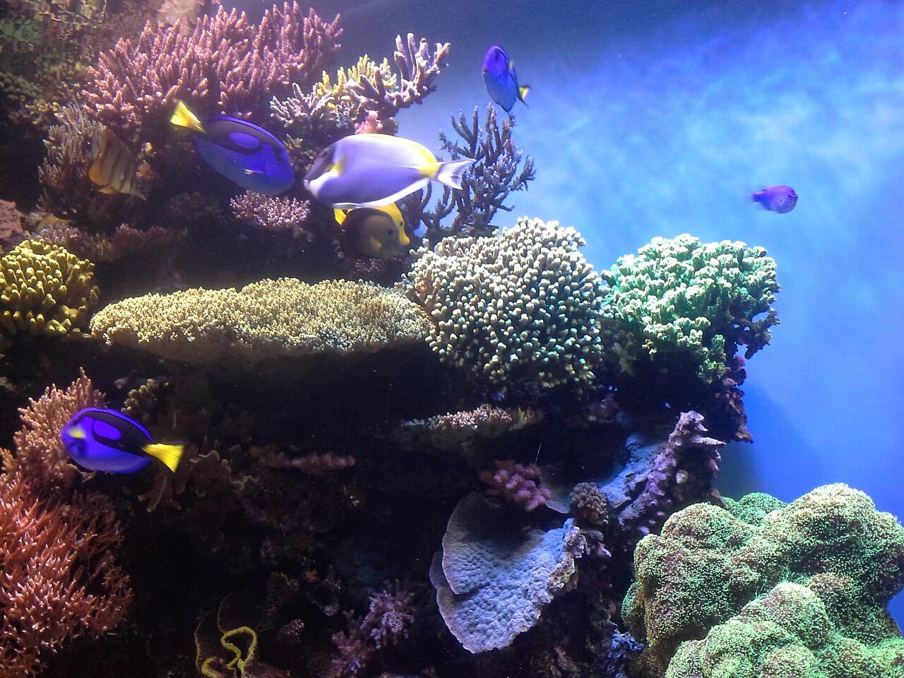 coral-reef-474052_1280.jpg