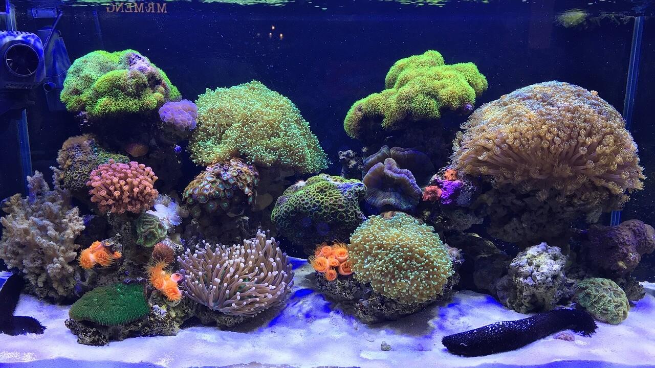 aquarium-2922841_1280(1).jpg