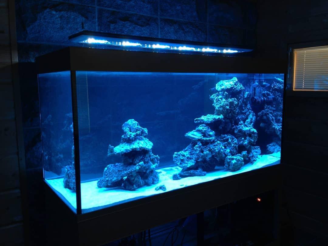 Giesemann Futura merivesiakvaario.jpg