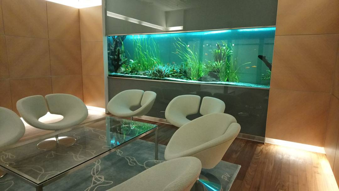 Siniriutta akvaario makeanvesiakvaario