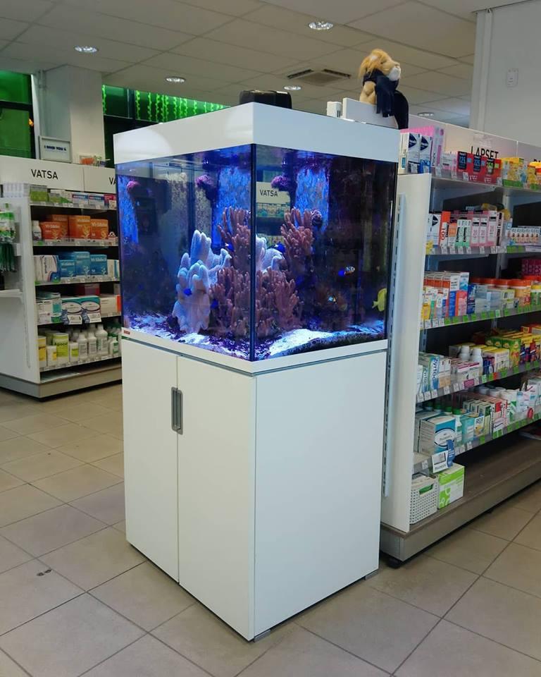 Siniriutta merivesiakvaario akvaario riutta-akvaario malmin apteekki