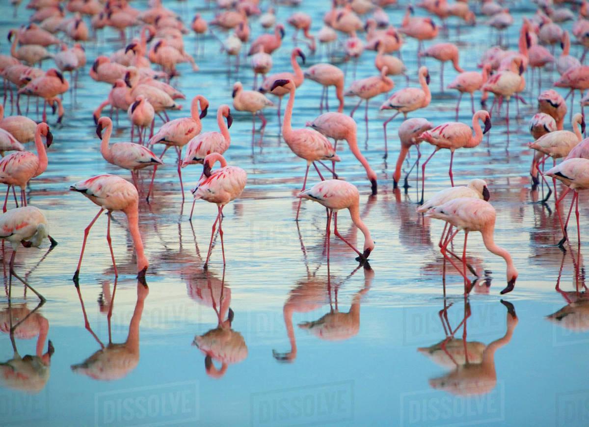 Flock of flamingos.jpg