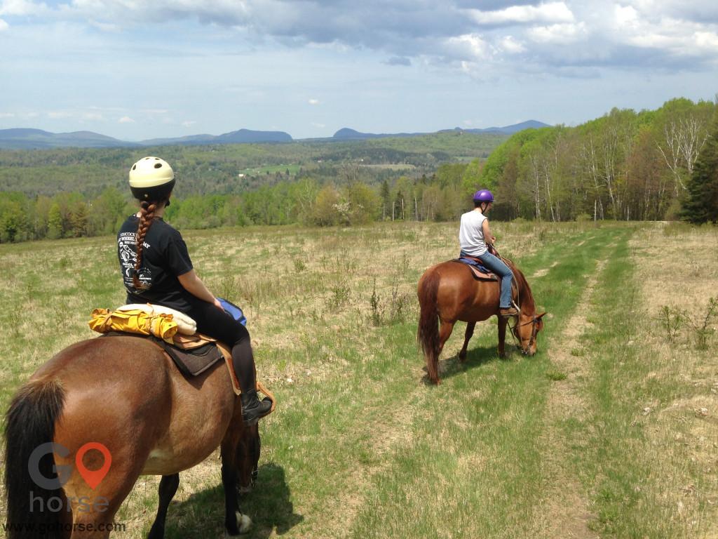 horse-boarding-56131-66.jpeg