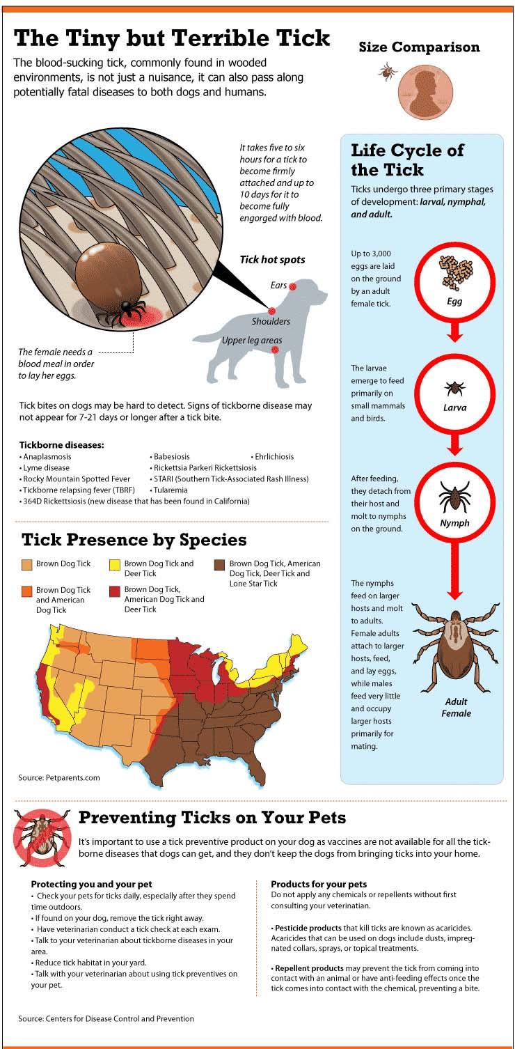 ticks info.jpg