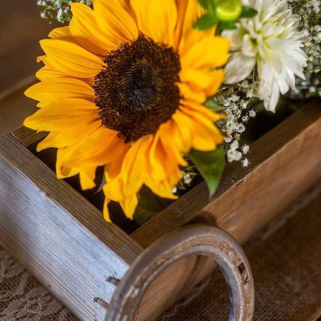 Is Fall coming yet? . . . . #welovefall #sunflowers #fallweddings #ranchwedding #countrywedding #weloveflowers #welovethelove #weddingflowers #beautifulbouquet #hollisterwedding #weddingflorist #lasvegasflorist #foxcreekranch