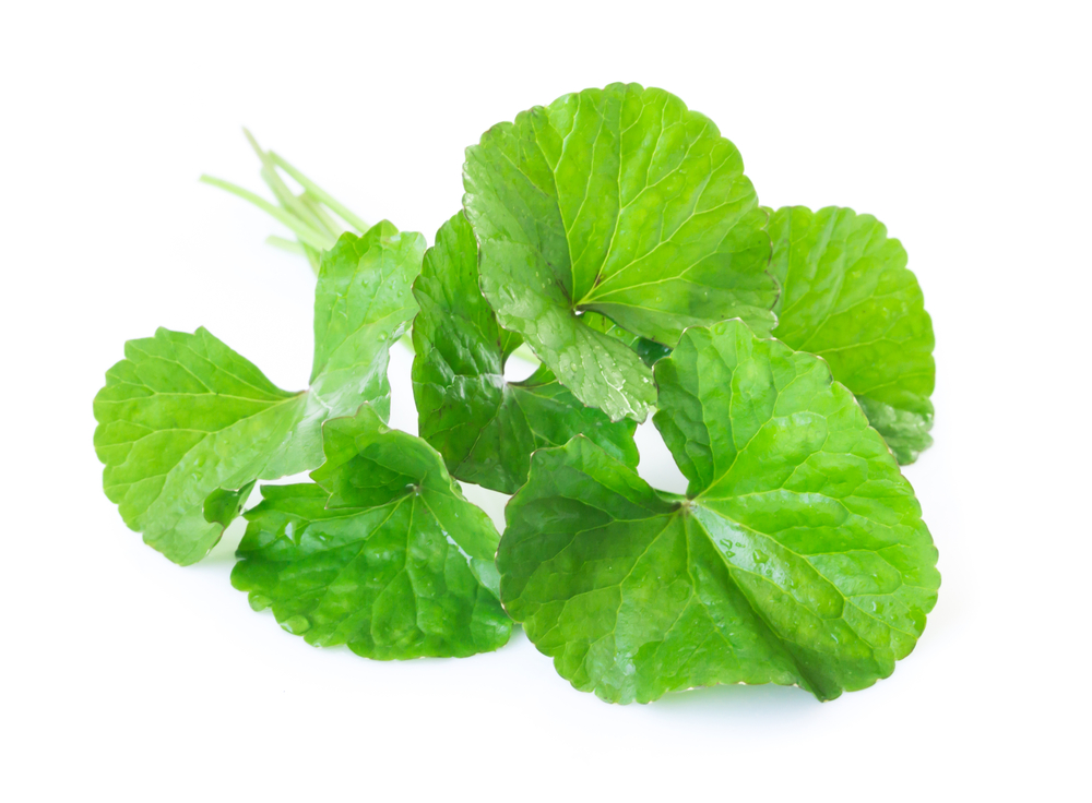 Gotu Kola - Used in Ayurveda for thousands of years to purify skin blemishes, reduce dark spots and build collagen
