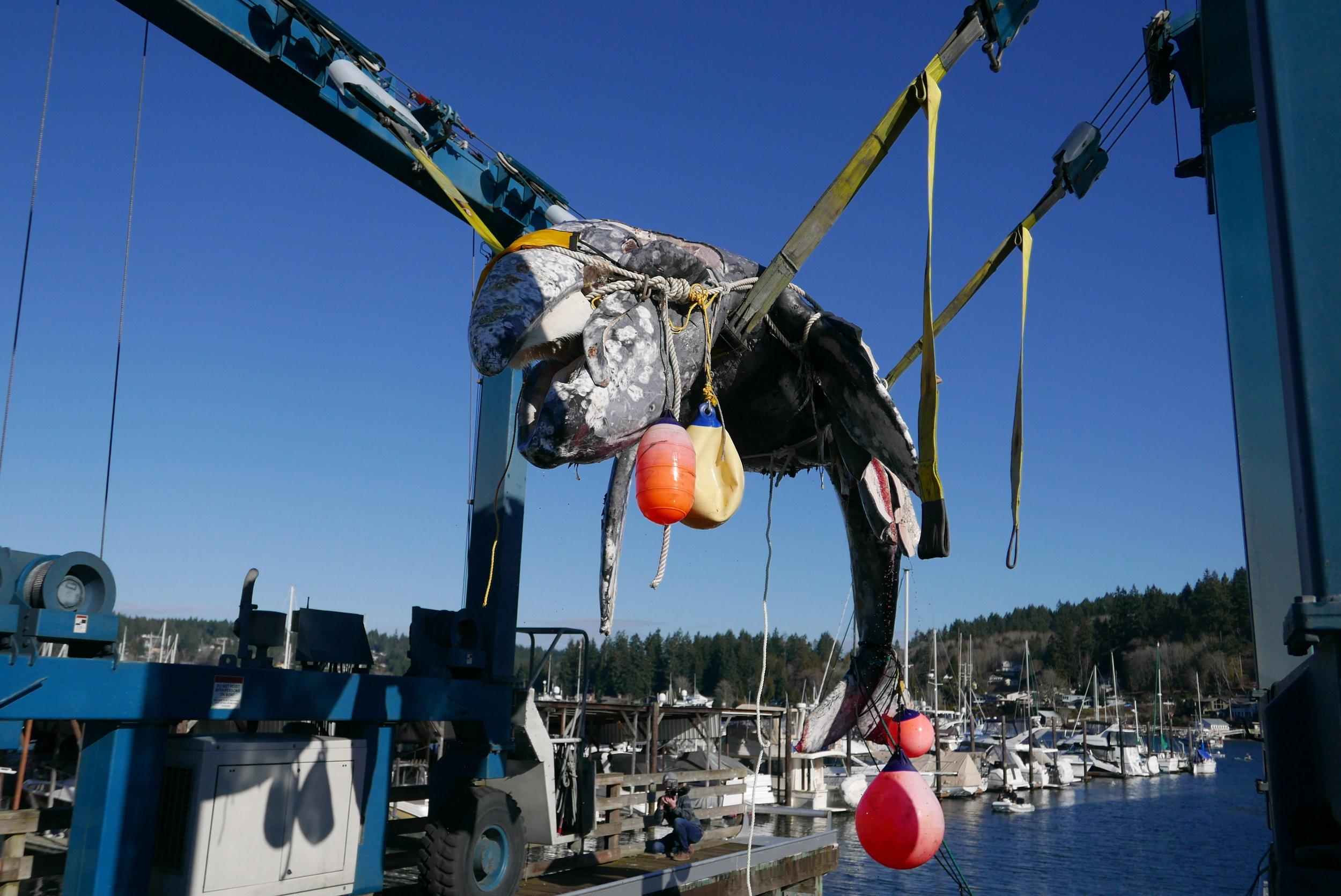 Hoisting the Whale