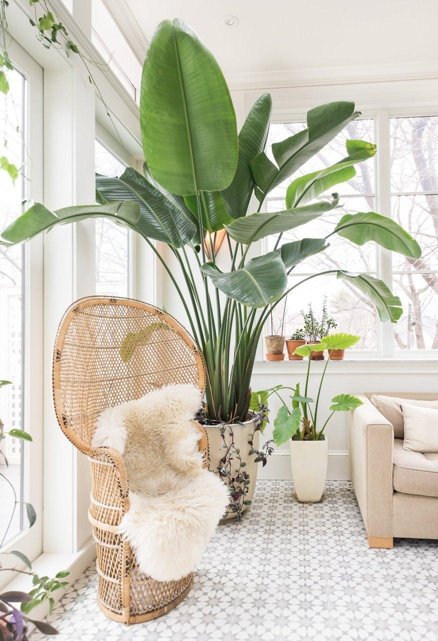 Tropical plants in a boho living room