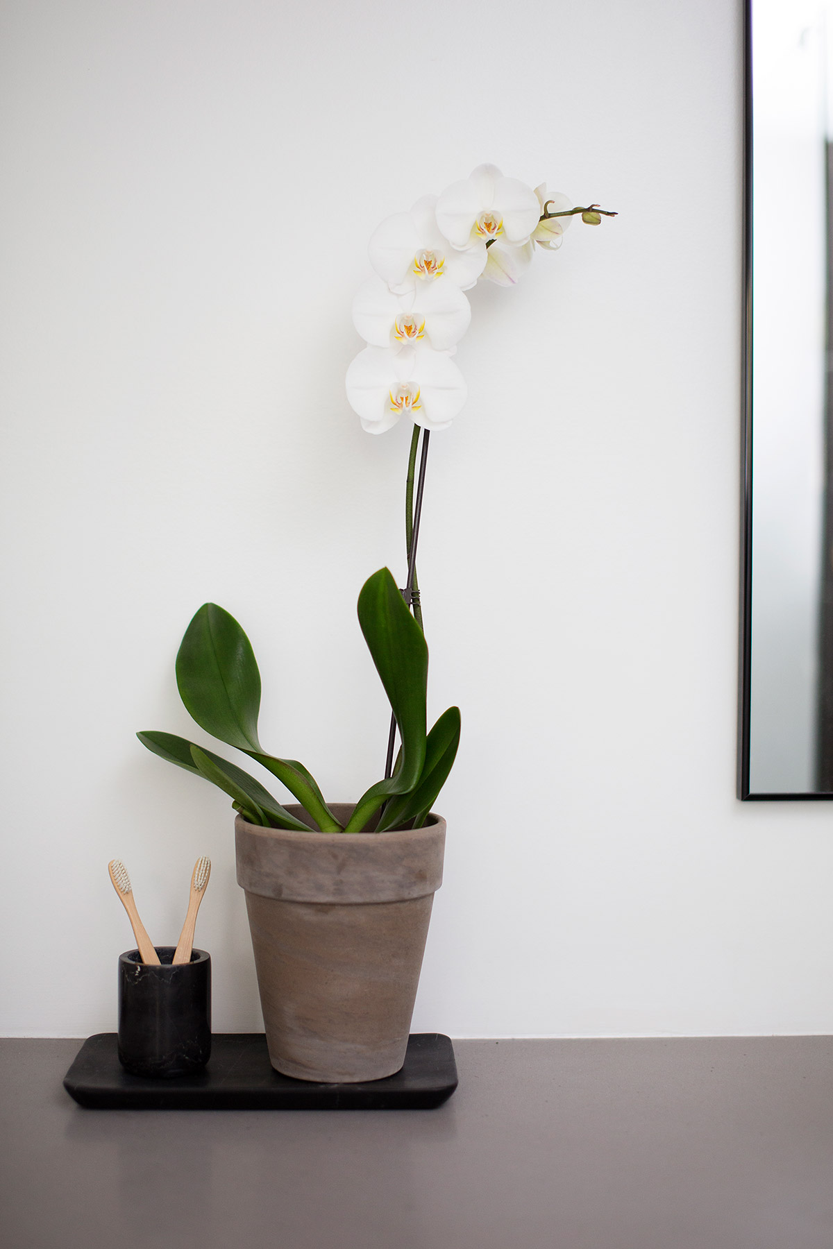 Orchid in master bathroom
