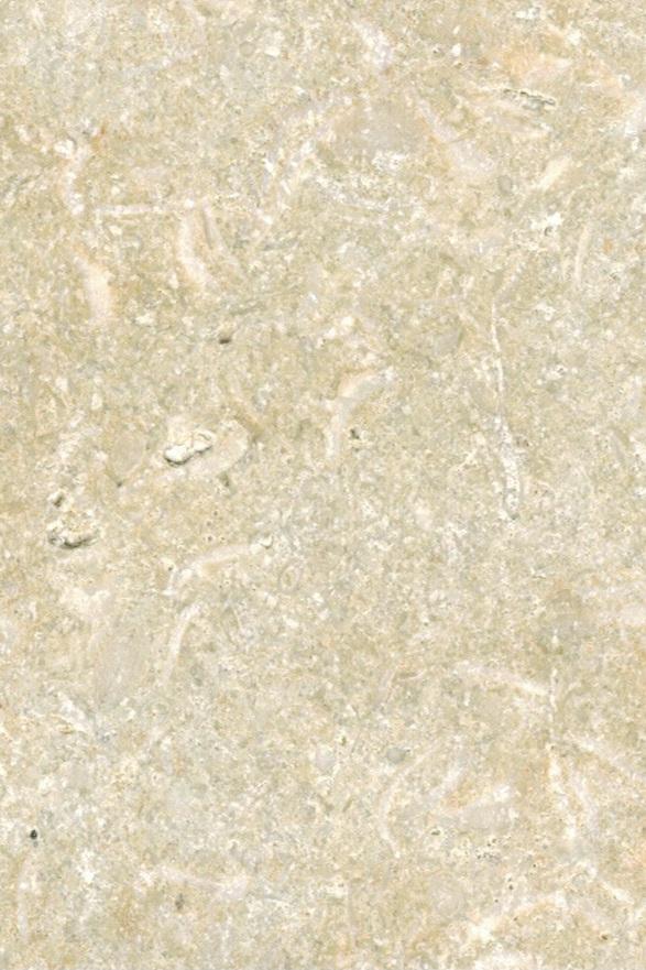 Tunisian Gold - Limestone