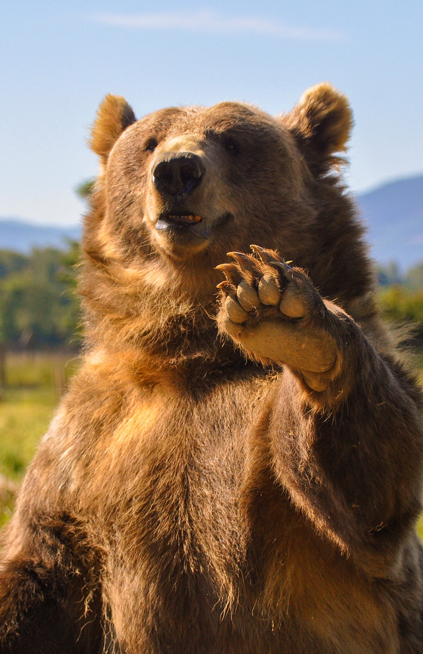 waving-bear.jpg