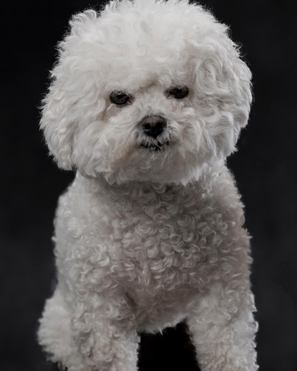 Yuki Bear - Studio Dog