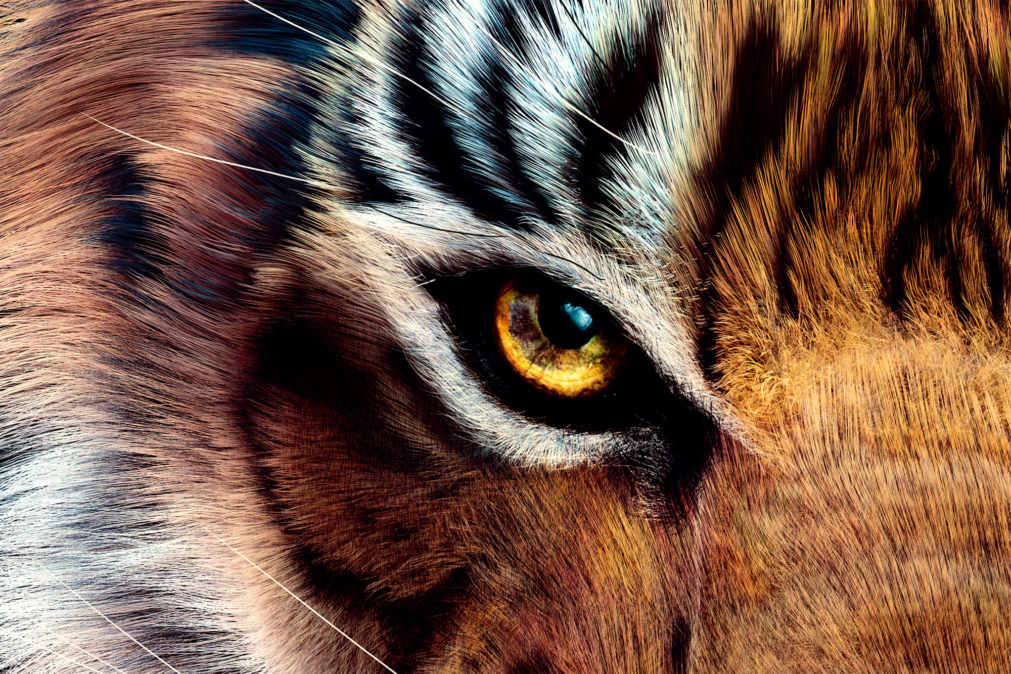 tiger_close_up.jpg
