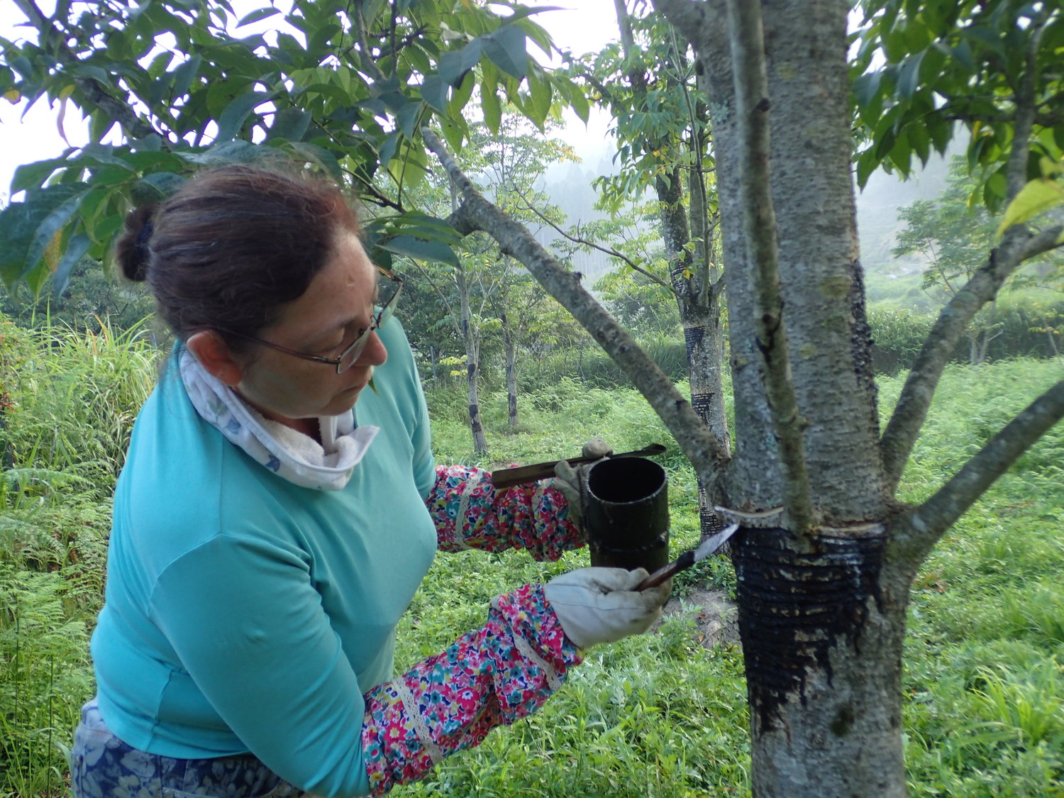 Suzanne tapping an urushi tree