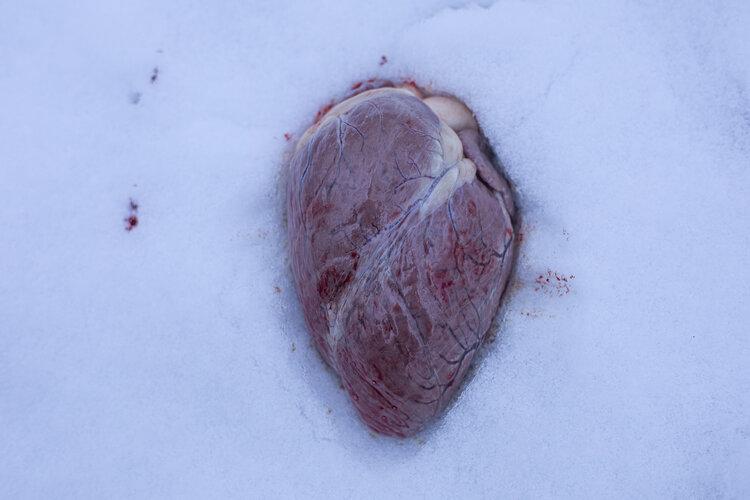 قلب در برف. jpg