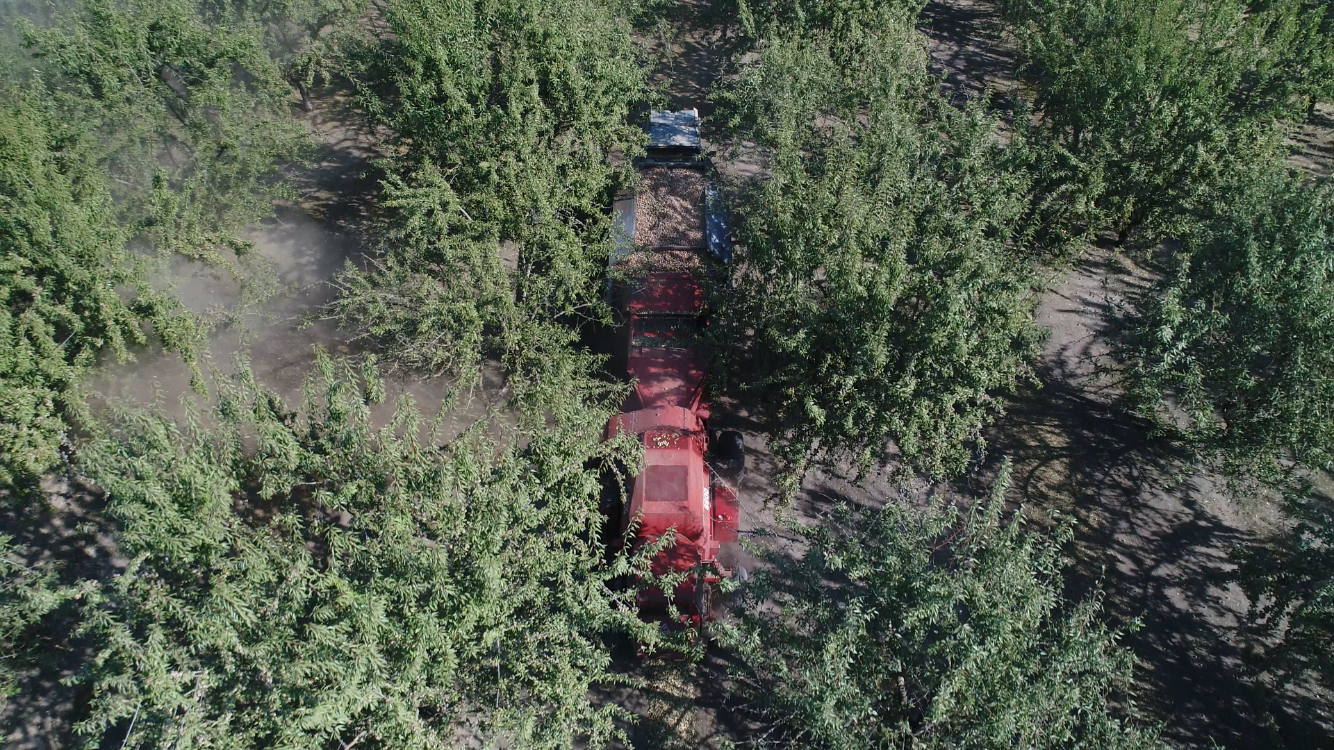 Drone Almond Harvest.png