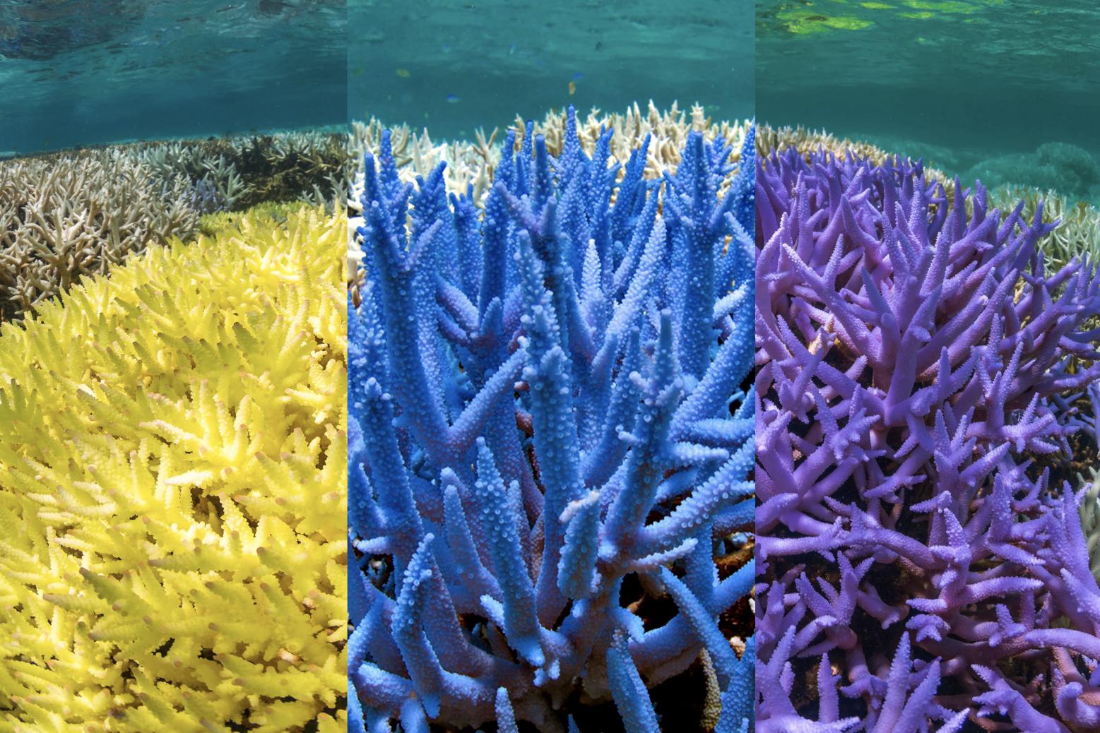 ggg-yellow-blue-purple-coral.jpg