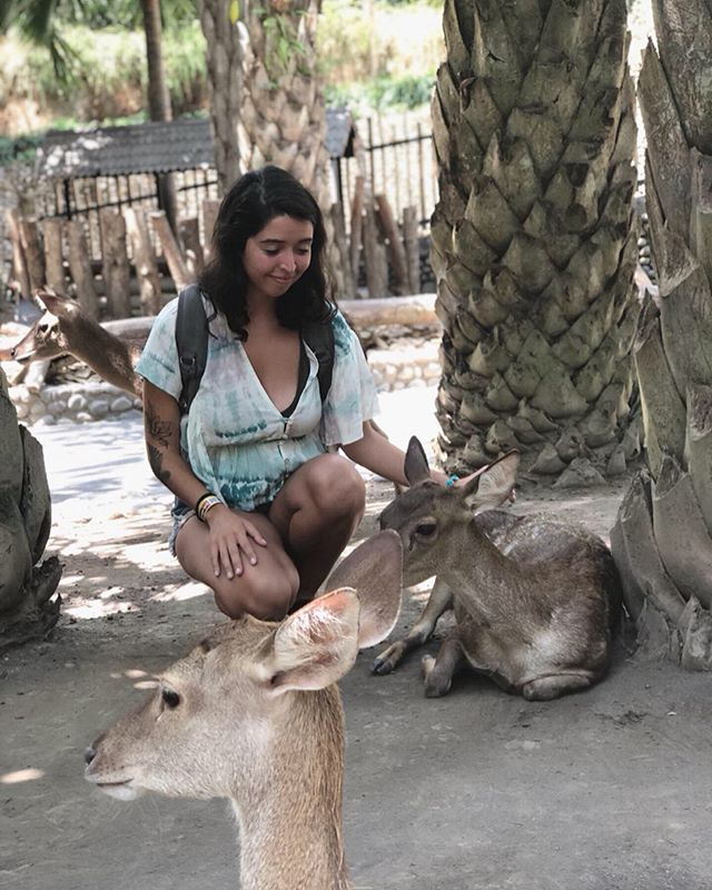 🦌 part of me really hates zoos.. Then the other part is a gleeful little kid who is excited to pet animals. How do you feel about keeping animals in a zoo? . . . #balizoo #zooanimal #deerwhisperer #pettingzoos #travelingyogini #traveldestination #travelinglifestyle #yogalifestyle #balivacation #innerchild #pettinganimals