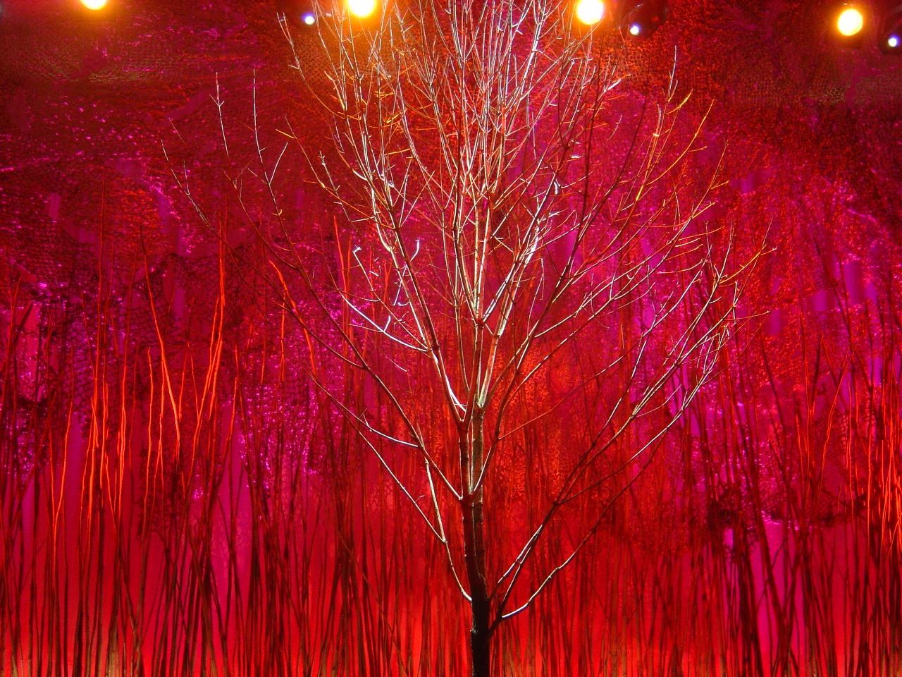 (Tree 2) DSC04024 2.JPG
