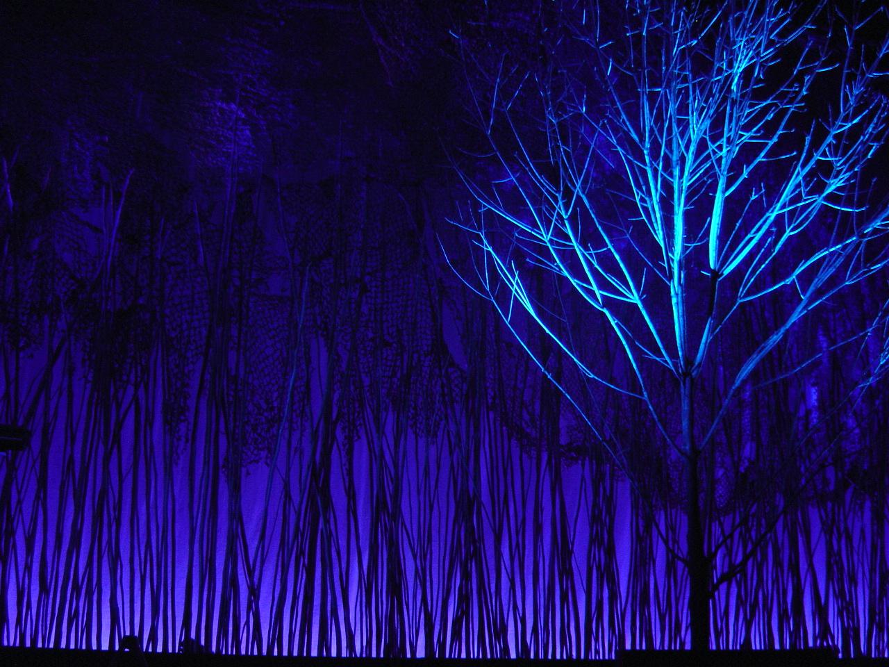 (Tree 1) DSC04022 2.JPG