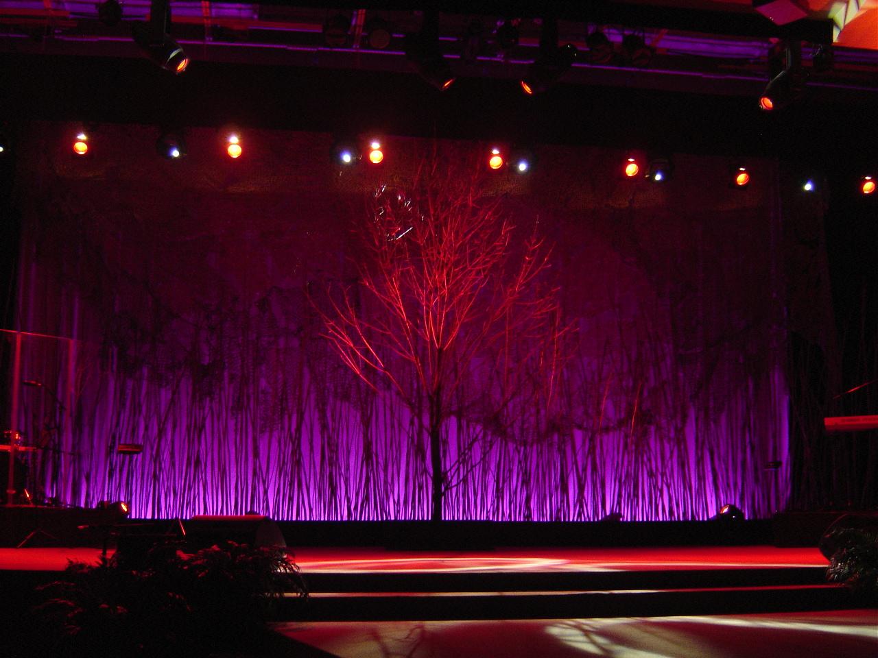 (Tree 6) DSC04031.JPG
