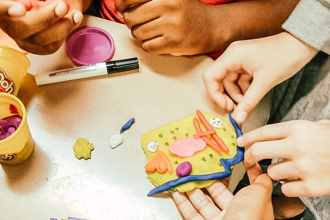 Middle School Creating Cells with Dough