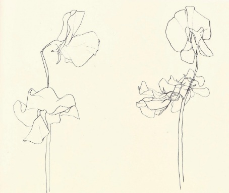 Ellsworth Kelly,  Plant Drawings