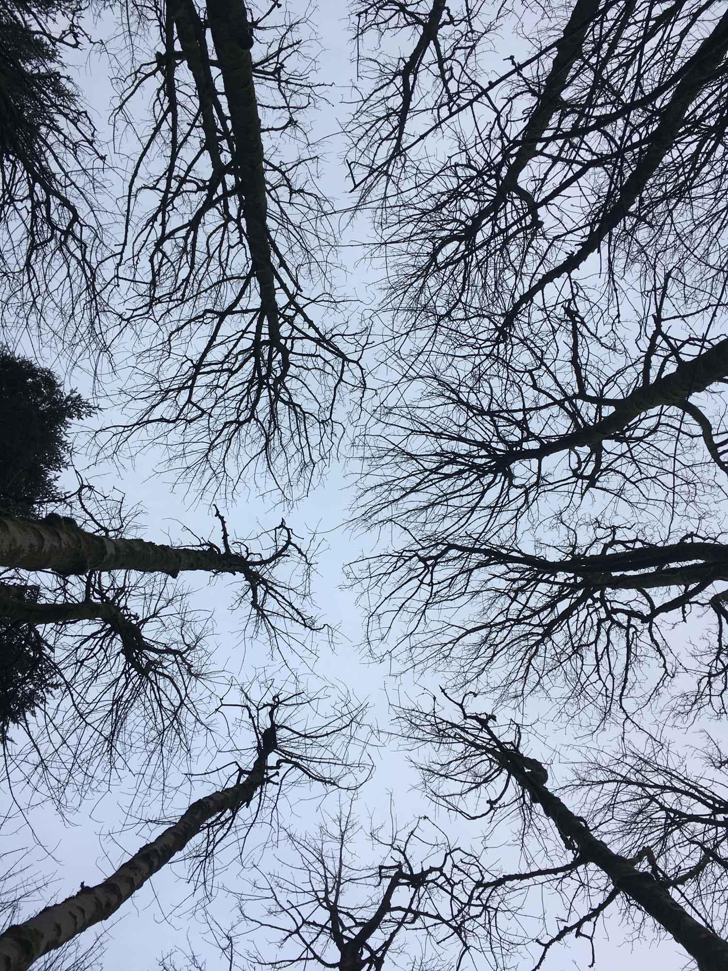 rebecca_bramwell_tree.jpg