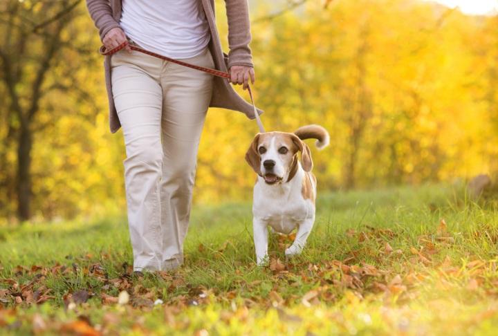 dog on walk.jpg