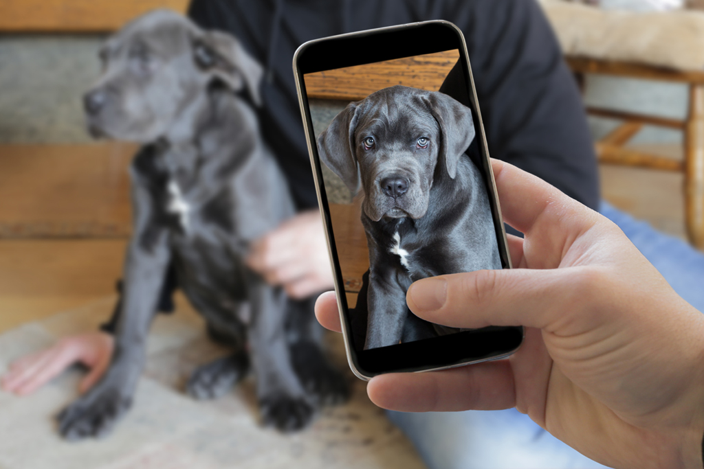 dog with phone.jpg