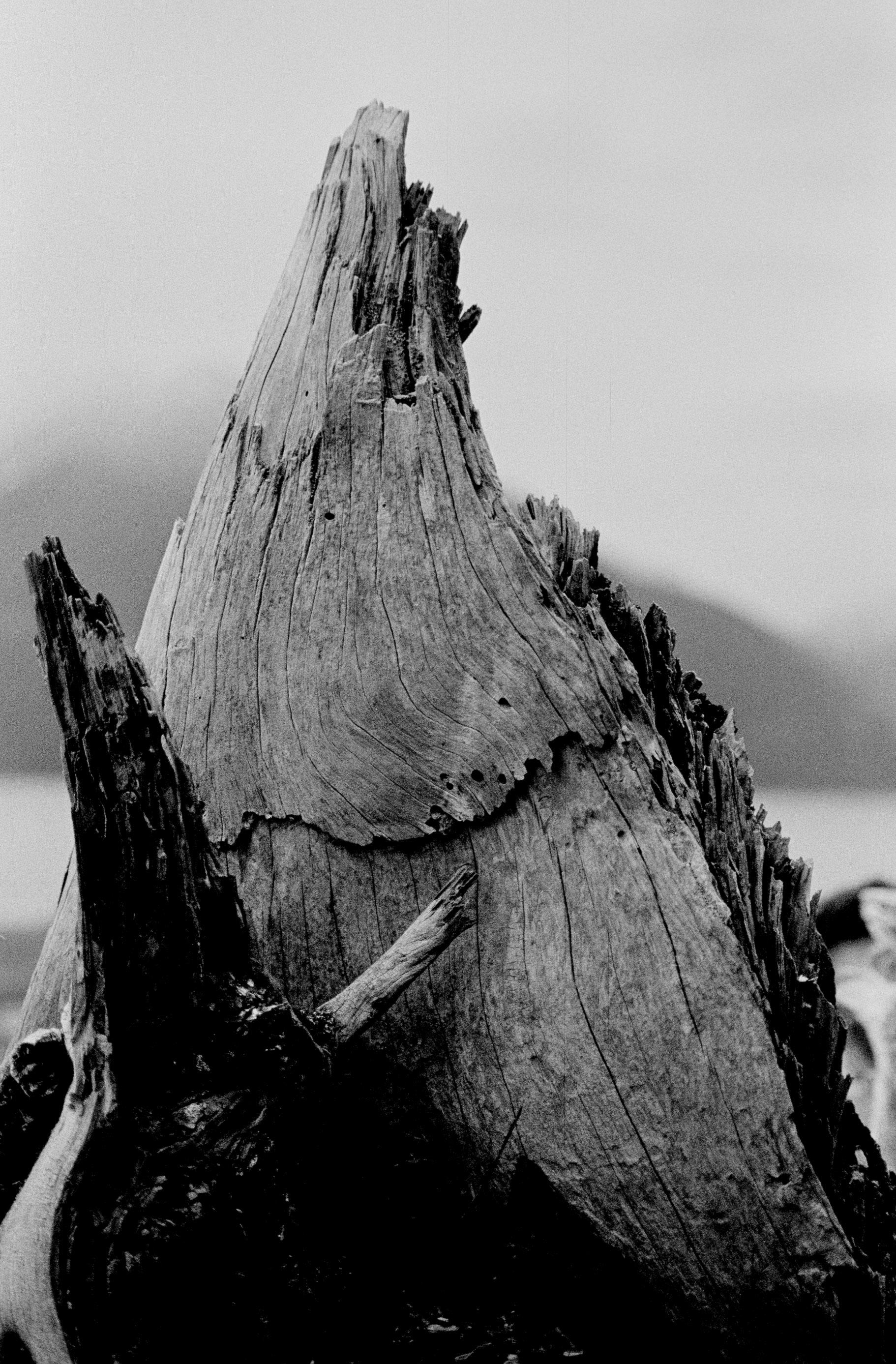 vancouver photography Michele Bygodt 54