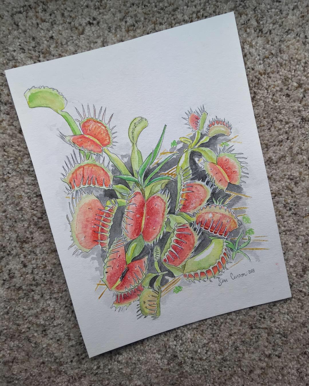 Dionaea muscipula, 9x11