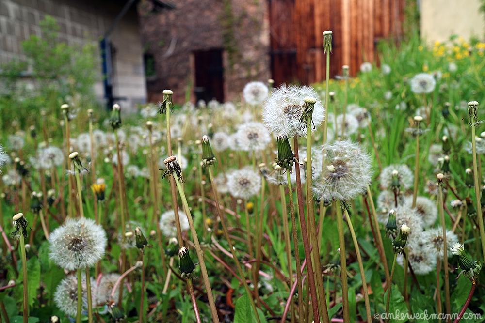 AnkeWeckmann-Blog-Spring2019-6.png