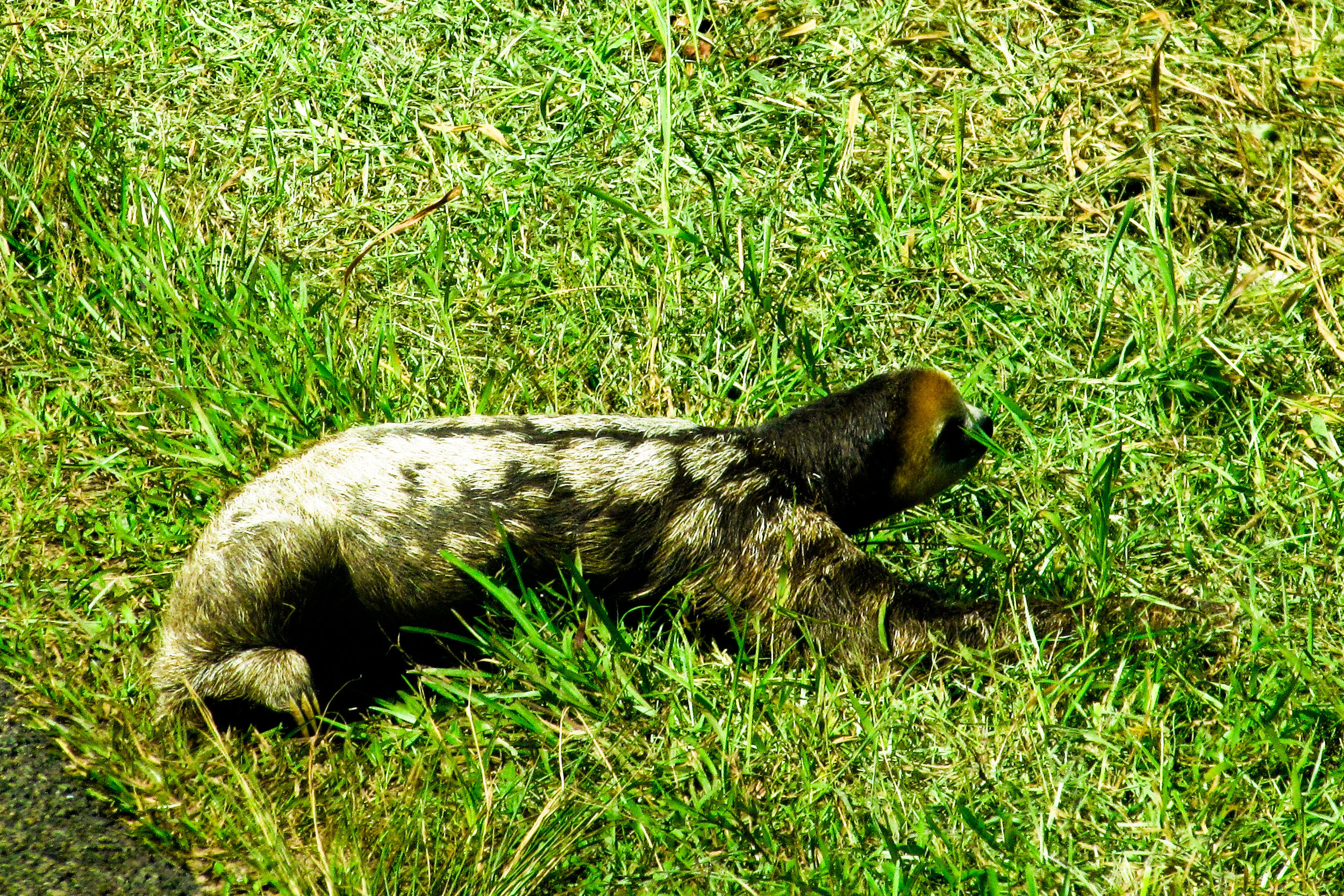 sloth-1155844.jpg